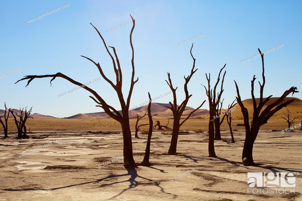 Stock Photo: sossusvlei dead valley in Namib-Naukluft Park, Namibia.