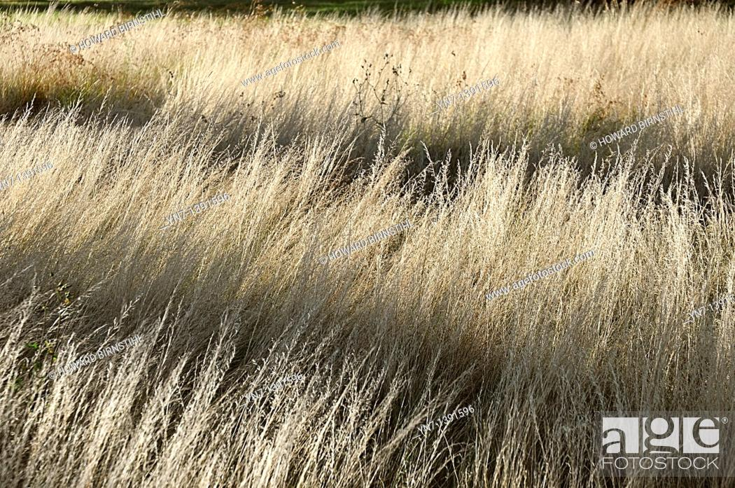 Stock Photo: Horizontal shadows fall across a field of creamy dry grass.