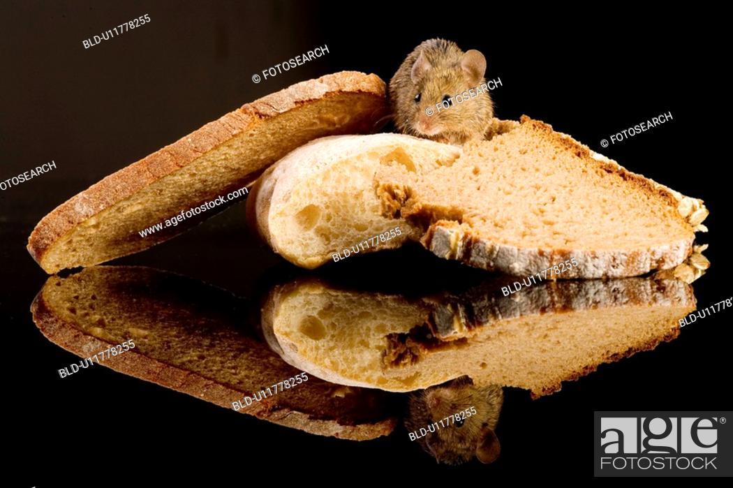 Stock Photo: brotkrume, aliment, bread, animals, animal, alfred.