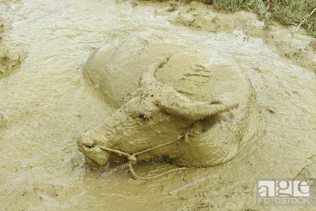 Stock Photo: Wildlife, Mammals,.