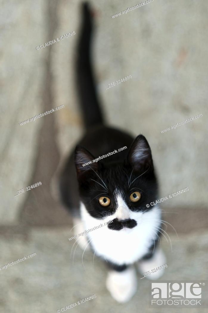 Imagen: Black and white kitten with a black moustache is looking up at camera.