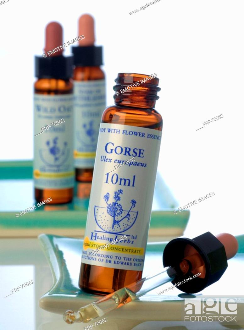 Stock Photo: Homeopathic remedies: Gorse.