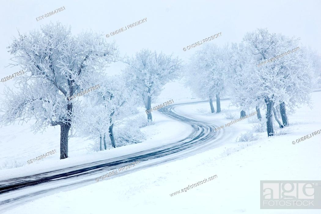 Stock Photo: Snowy winter road, trees with snow and fog.