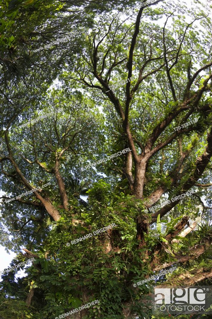 Stock Photo: Vegetation of Kimbe Bay, New Britain, Papua New Guinea.