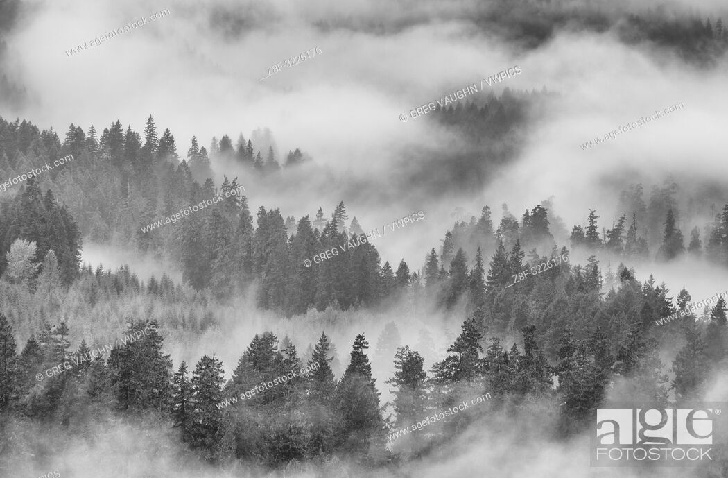 Imagen: Fog, rain and clouds in forest on southeast side of Mount Saint Helens National Volcanic Monument, Cascade Mountains, Washington.