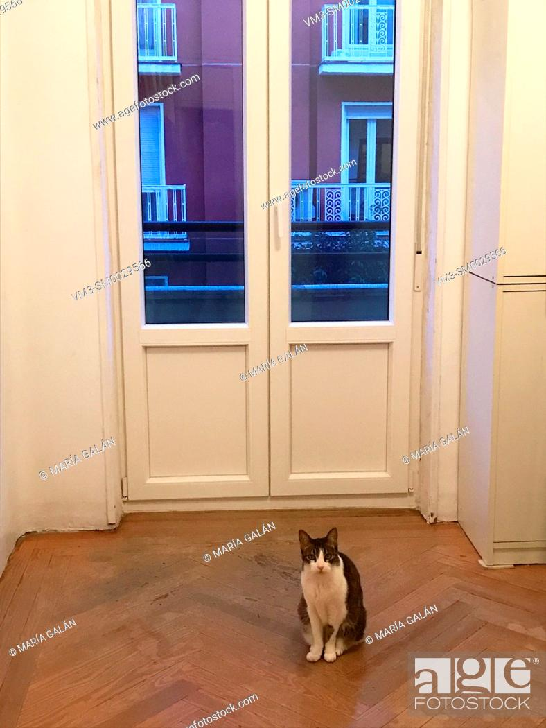 Stock Photo: Cat at home, sitting by the window, looking at the camera.