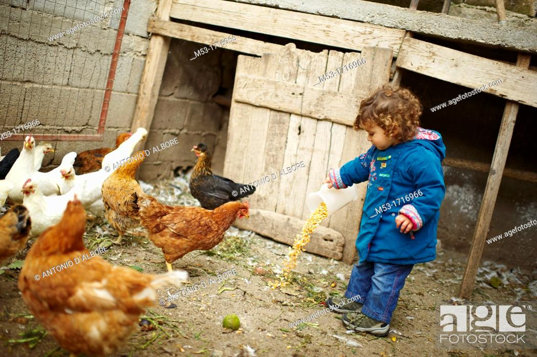 Stock Photo: A one years old girl pouring corn on the ground of a henhouse.
