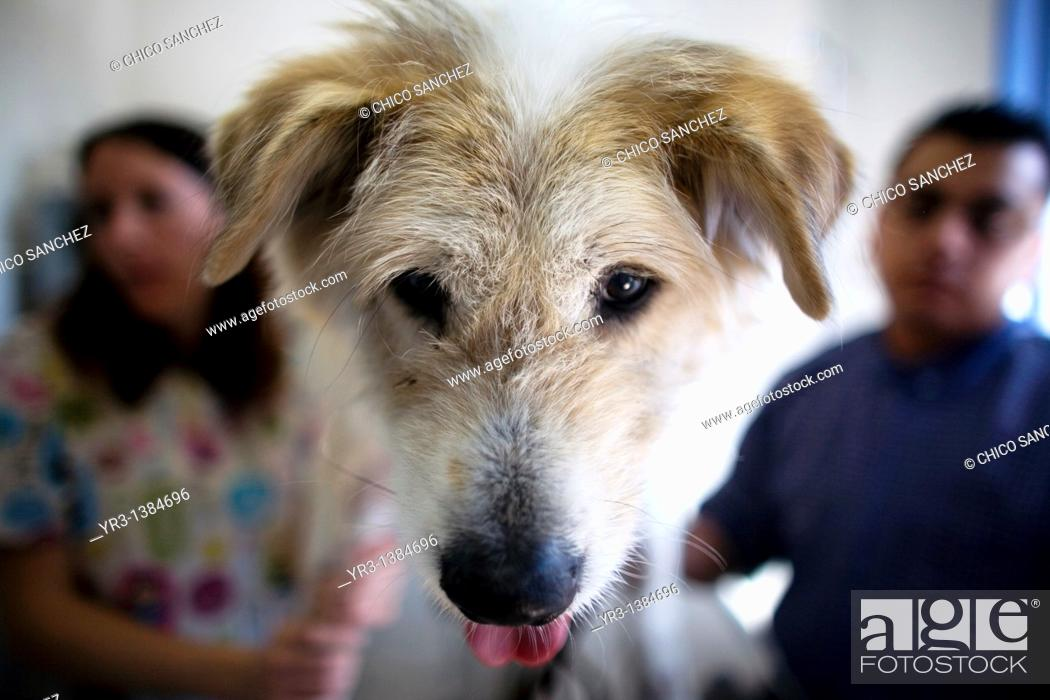 Stock Photo: Veterinarians attend a dog at a Pet Hospital in Condesa, Mexico City, Mexico, January 31, 2011.