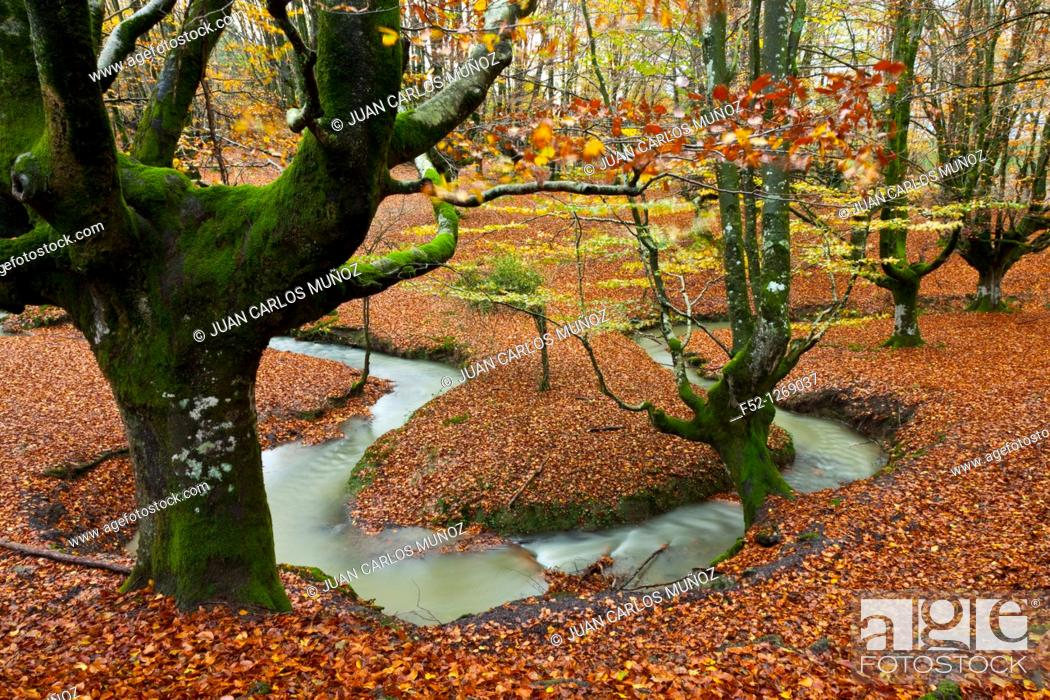 Stock Photo: Beech forest in autumn, Gorbea Natural Park, Alava-Vizcaya, Basque Country, Spain.