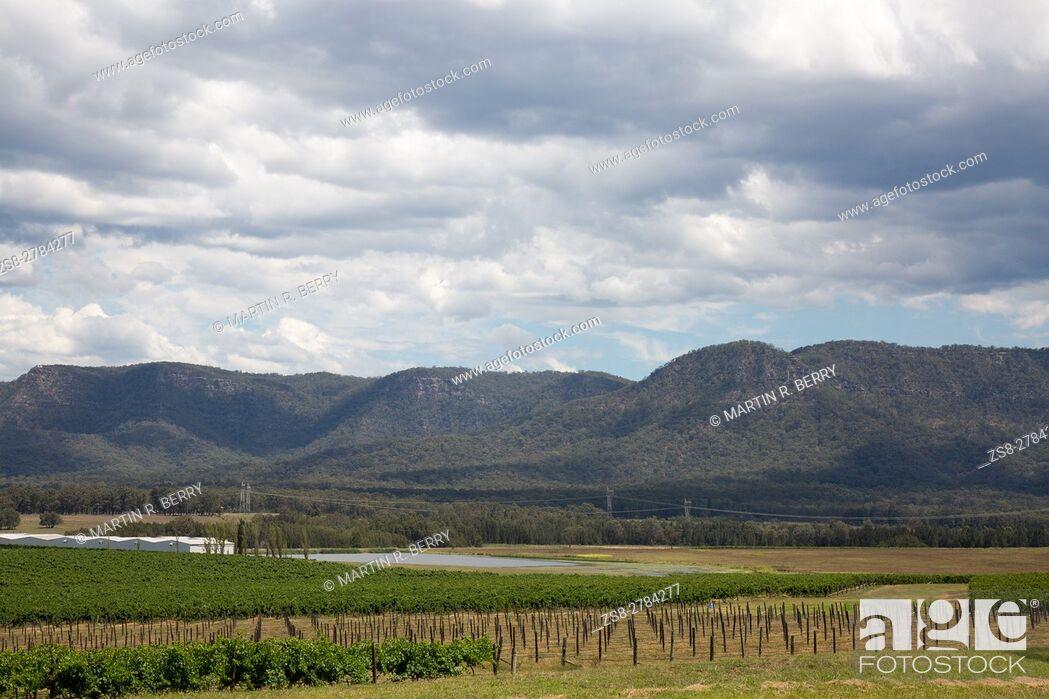 Stock Photo: Hunter Valley Wine Region in New South Wales, Australia.