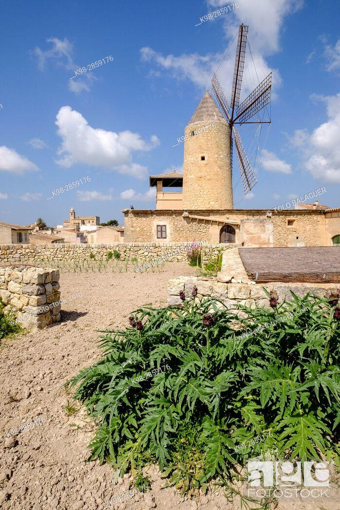 Imagen: molino harinero tradicional, Molino de Can Cotó, siglo XIX, Maria de la Salut, Mancomunidad del Pla, Mallorca, balearic islands, spain, europe.