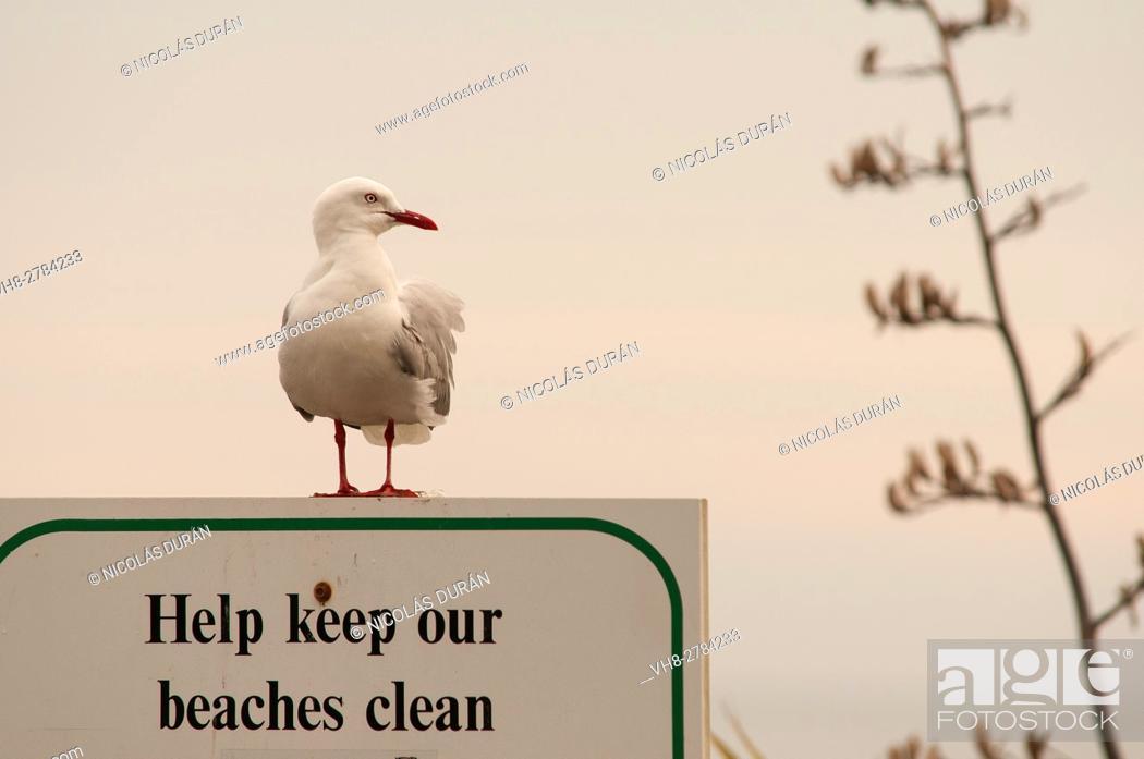 Stock Photo: Keep our beaches clean. Kaikoura. Canterbury Region. New Zealand.