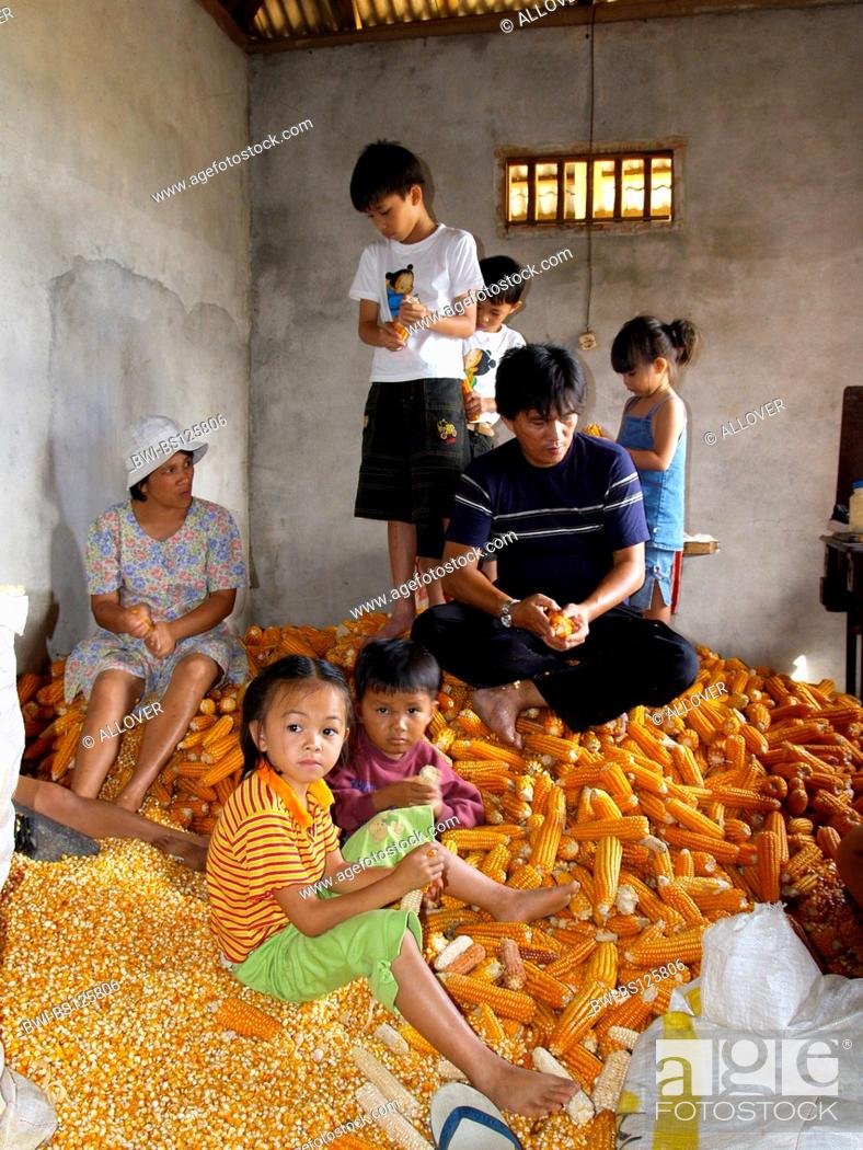 Stock Photo: family in the middle of corn cobs, Indonesia, Sulawesi, Tomohon.
