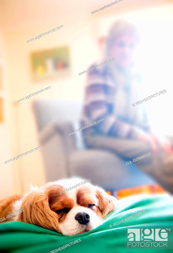 Stock Photo: Dog sleeping with senior woman in background.