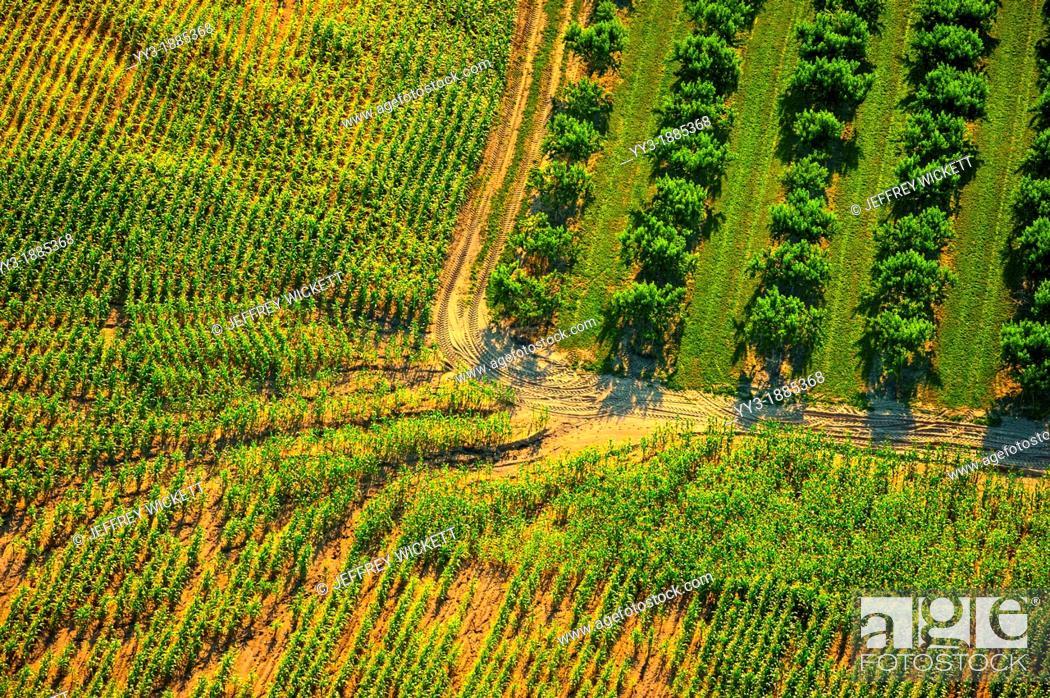 Stock Photo: Aerial erosion through corn plantation next to orchard in Oceana county, Michigan, USA.