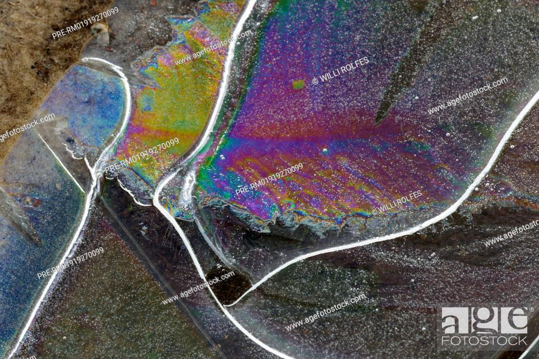 Imagen: Ice on a puddle, Goldenstedter Moor in winter, Niedersachsen, Lower Saxony, Germany / Eis auf einer Pfütze, Goldenstedter Moor im Winter, Niedersachsen.