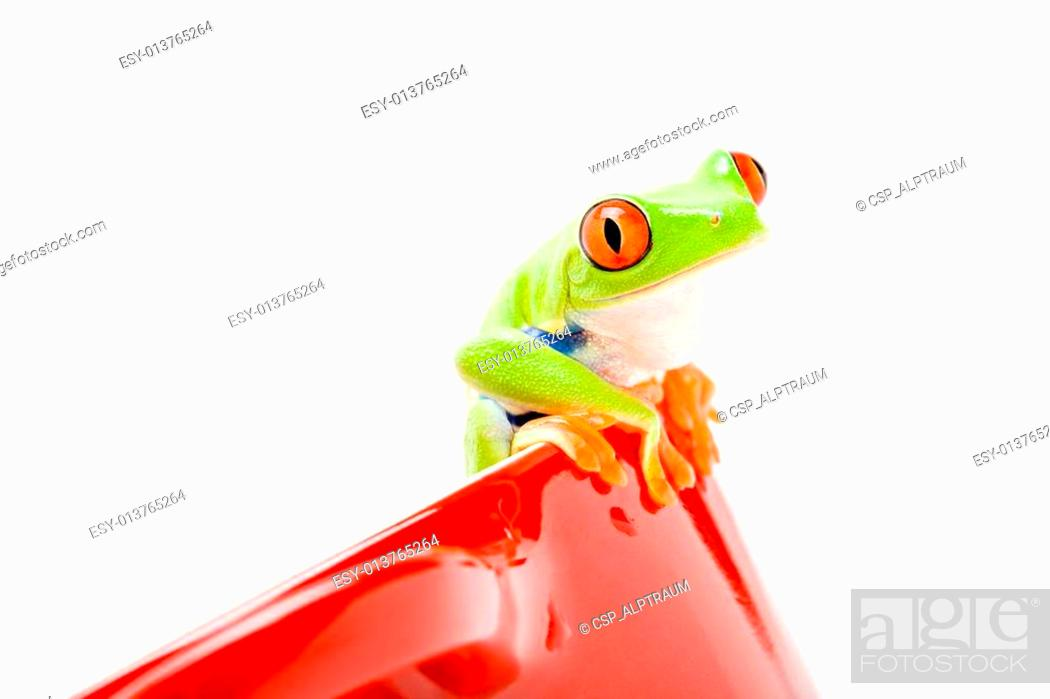 Stock Photo: frog on a pot.