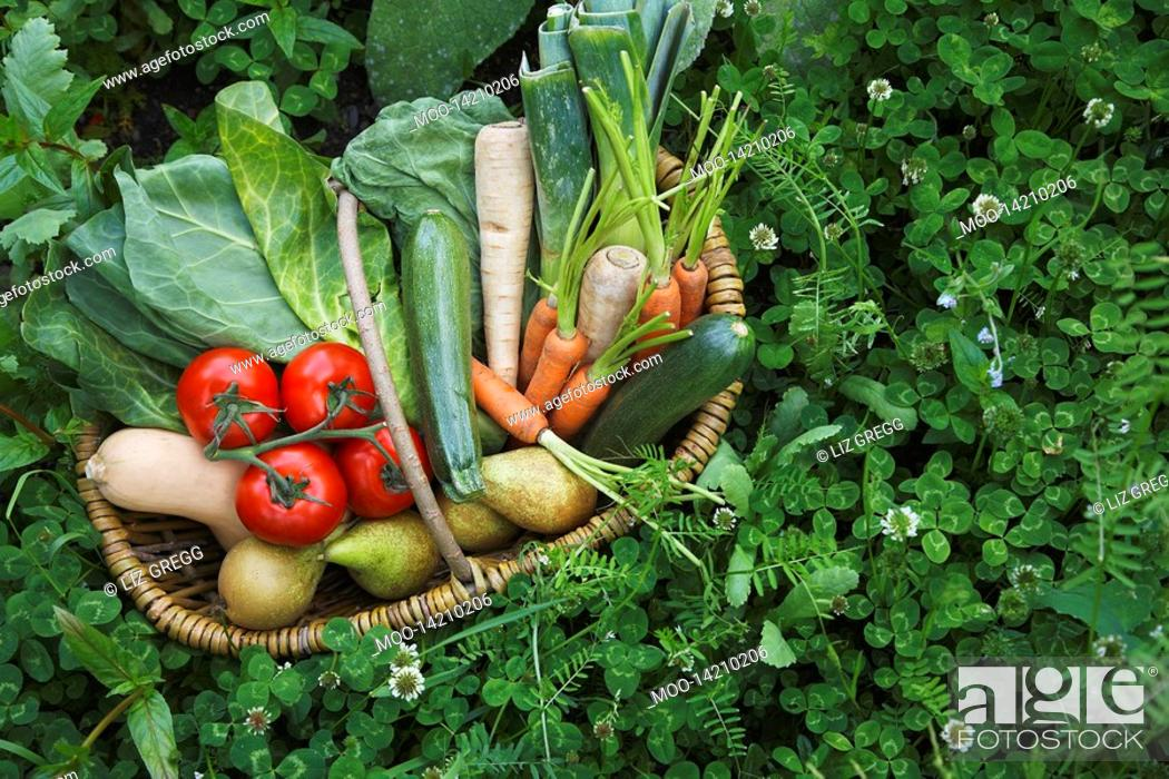 Stock Photo: Fruit and vegetable basket surrounded by clover.