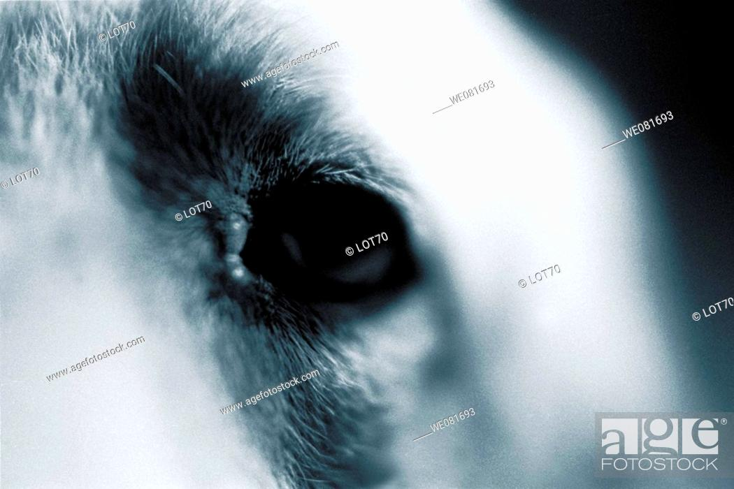Stock Photo: Dog's eye.