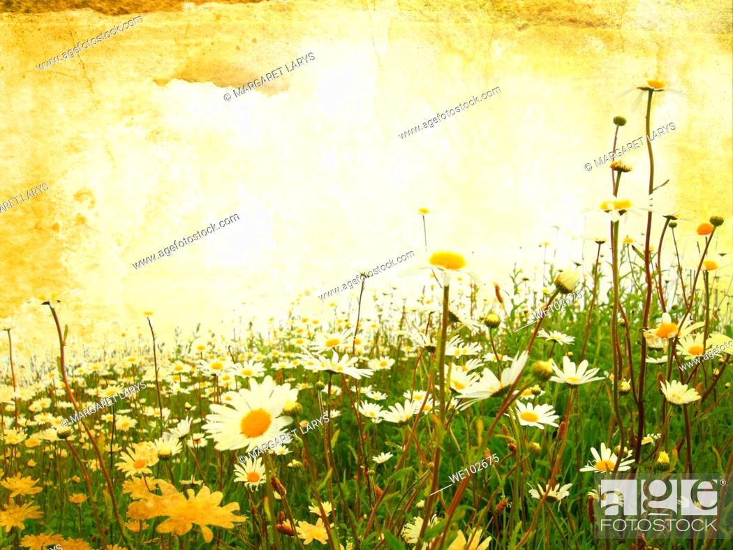 Stock Photo: Beautiful grunge background with meadow of daisies.