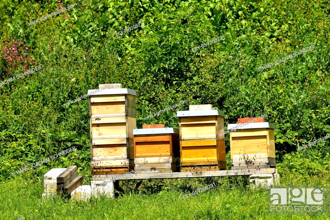 Stock Photo: beehives in a meadow in summertime in Germany.