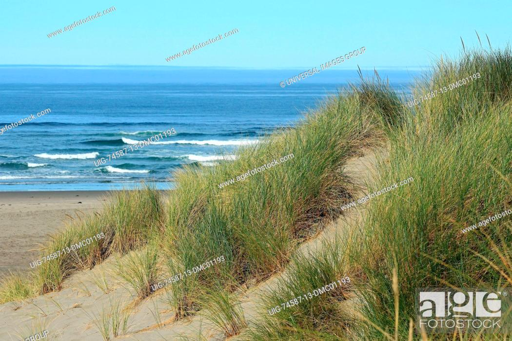 Stock Photo: Pacific coastal dunes in the Oregon Dunes National Recreation Area.