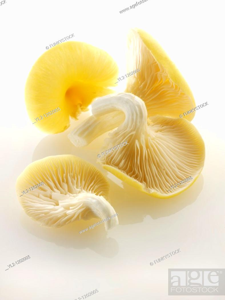 Stock Photo: Raw fresh Yellow Oyster mushrooms.