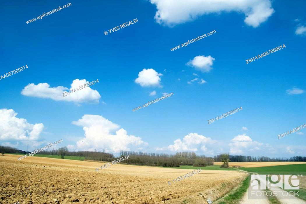 Stock Photo: Rural landscape with dirt road.