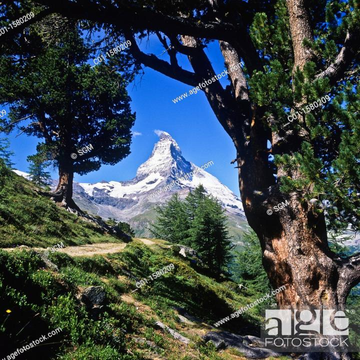 Stock Photo: Hiking trail with Arolla pine trees and Matterhorn, Zermatt, canton Valais, Switzerland.