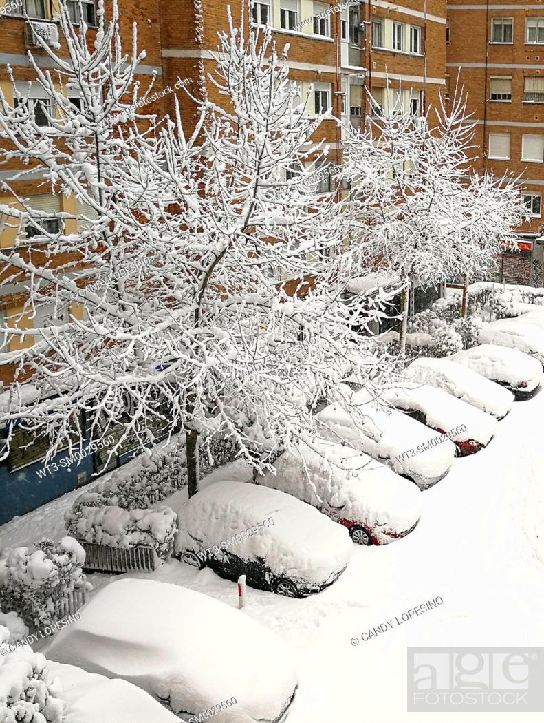 Stock Photo: January 9, 2021, trees and cars covered by snow on a street in Aluche after Storm Filomena brought intense snow, MADRID, SPAIN, EUROPE.