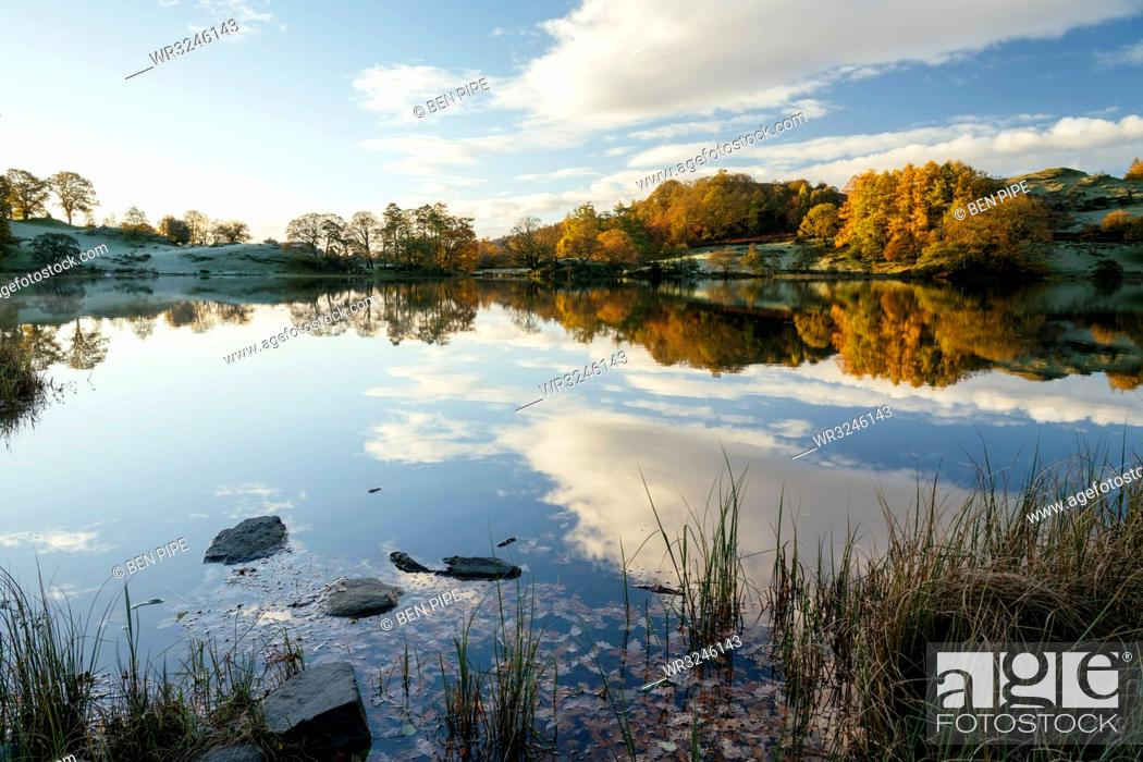 Stock Photo: Dawn light at Loughrigg Tarn, Lake District National Park, UNESCO World Heritage Site, Cumbria, England, United Kingdom, Europe.