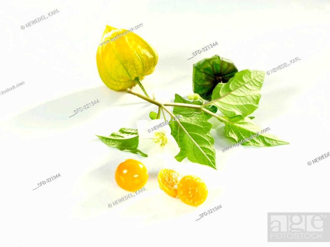 Stock Photo: Two Cape gooseberries with stalk and flower.