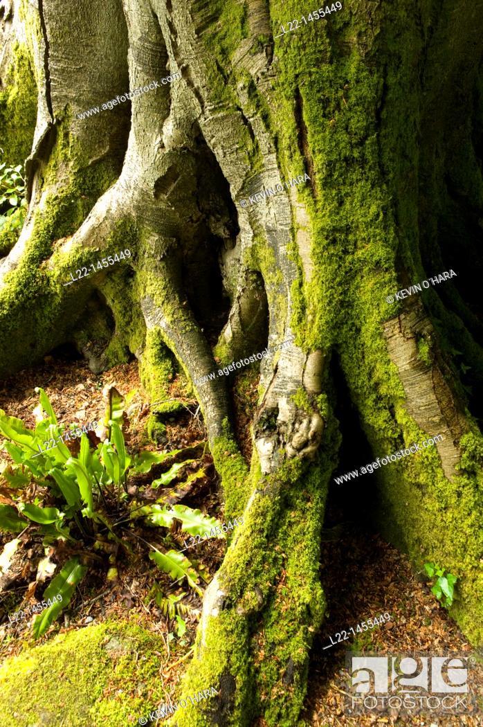 Stock Photo: Altamount Gardens known as the most romantic garden in Ireland, Tullow, Co. Carlow, Ireland.