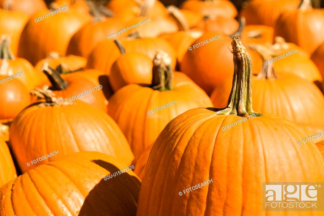 Stock Photo: Group of pumpkins at produce market.