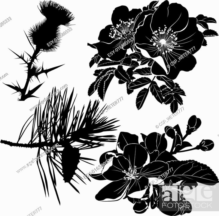 Stock Photo: thistle dogrose rose blooming apple.