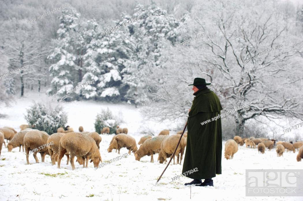 Stock Photo: Sheperd with sheep herd in winter, Steigerwald, Bavaria, Germany.