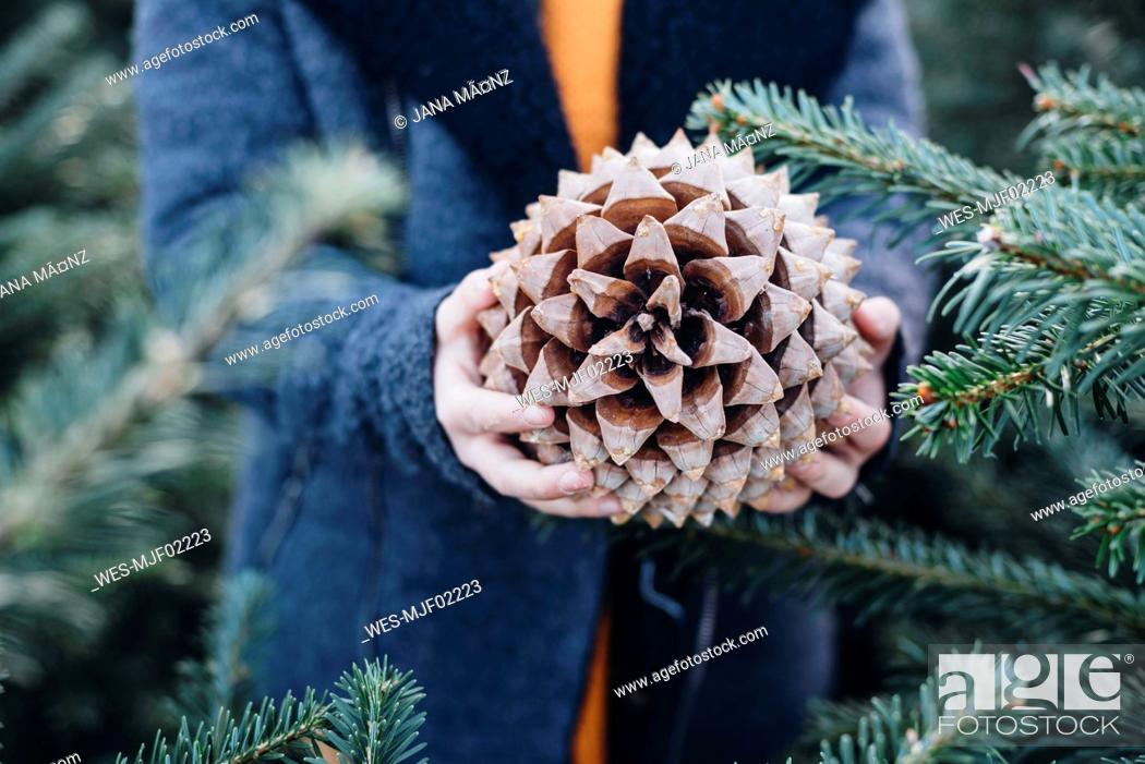 Stock Photo: Little boy standing among fir trees, holding pine cone.