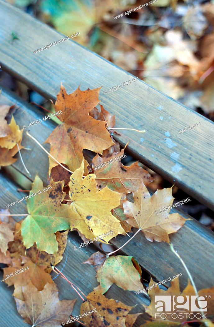 Stock Photo: Coloured leaves in autumn, lying on planks.