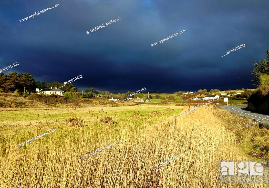 Stock Photo: Coast Road lined by Norfolk Reeds, Bunmahon, The Copper Coast, County Waterford, Ireland.