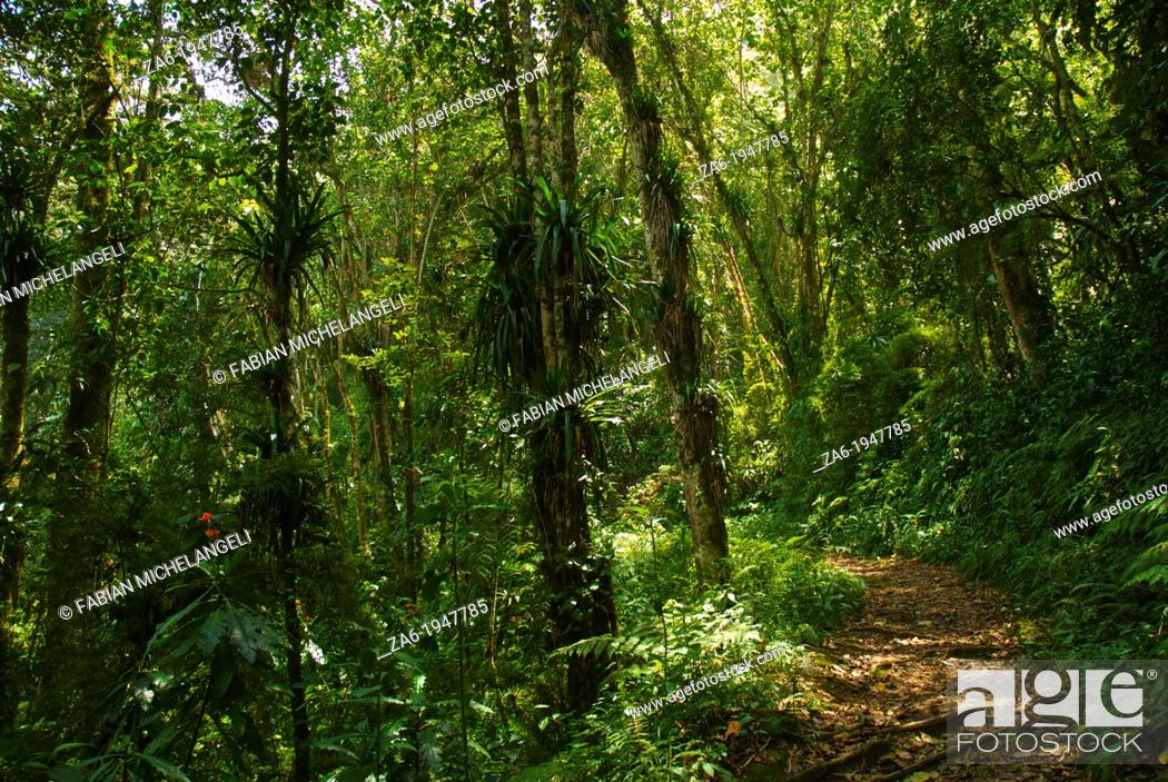 Stock Photo: Trail in the Rain Forest of the Sierra Nevada National Park in the Andes of Venezuela.