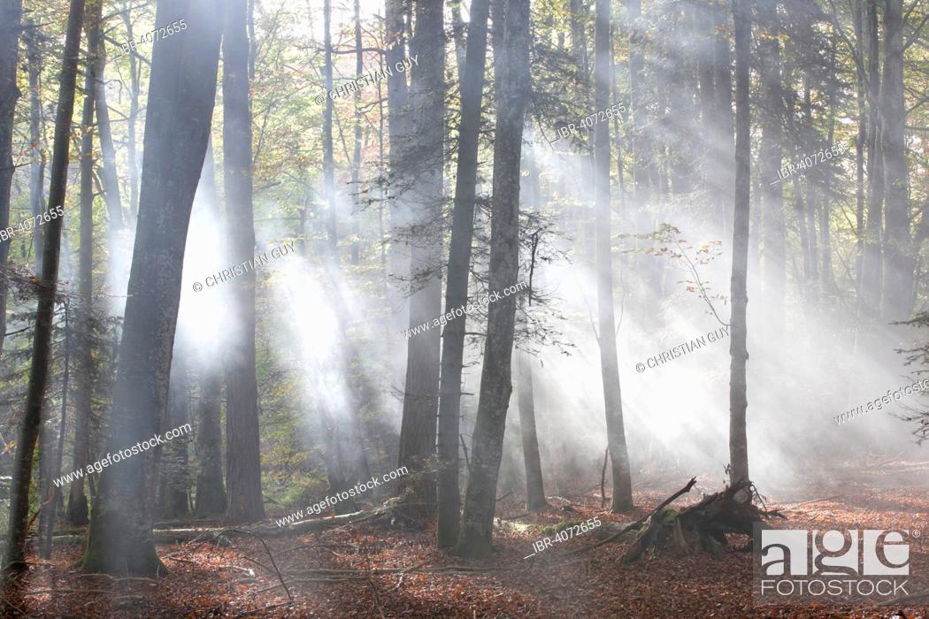 Stock Photo: Forest of Meydat, Parc Naturel Regional Livradois Forez, Natural regional park of Livradois Forez, Condat-les-Montboissiers, Puy-de-Dome, Auvergne, France.