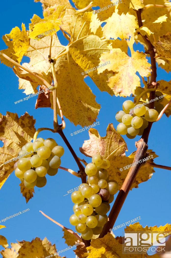 Stock Photo: Wineyards. Val di Funes. Trentino-Alto Adige, Dolomites, Bolzano province , Italy.