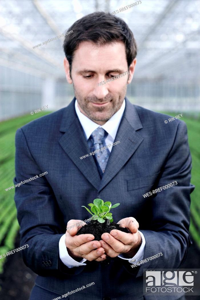 Stock Photo: Germany, Bavaria, Munich, Mature man in greenhouse with corn salad.