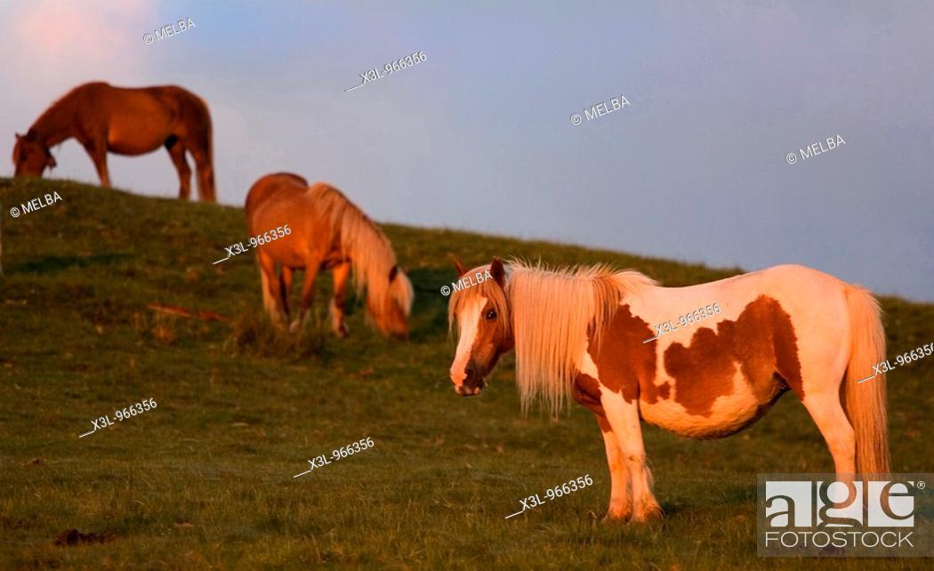 Stock Photo: Gorramendi mountain  Navarre  Spain.