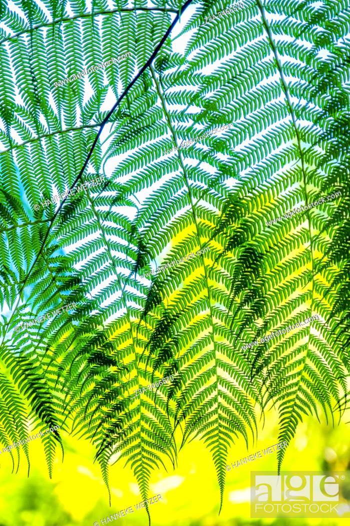 Photo de stock: Closeup of ferns in Topes de Collantes, Trinidad, Republic of Cuba, Caribbean, Central America.