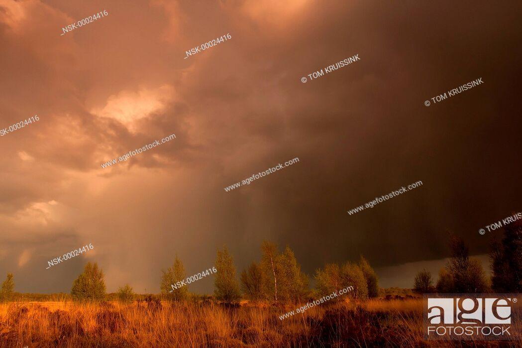 Imagen: Rain on the Engbertsdsijksvenen a peatmoor in the east of the Netherlands, the Netherlands, overijssel, Vriezenveen, Engbertsdijksvenen.