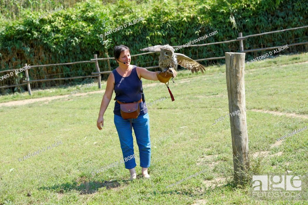 Stock Photo: A female falcones holding a Great Gray Owl Strix nebulosa during a falconery show at Sant'Alessio Wildlife Centre  Pavia  Italy.