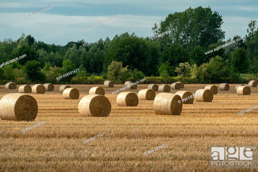 Stock Photo: Cheerful autumn scene with round bales of straw on a mown grain field in bright sunshine with impressive clouds in the skye.