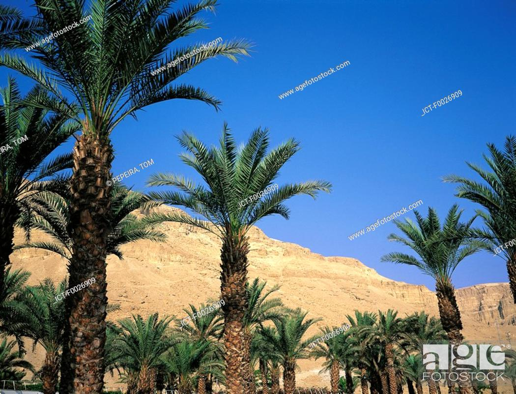 Stock Photo: Israel, Jerusalem, Ein Gedi oasis, palm trees.