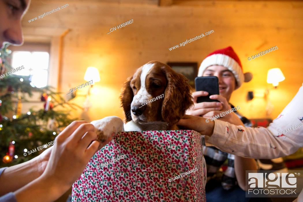 Stock Photo: Family with dog in Christmas gift box.